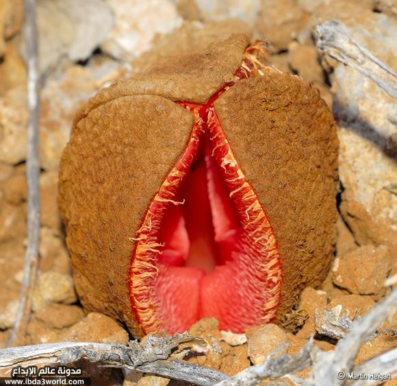 بالصور اغرب النباتات فى العالم , عجائب وعرائب و اشكال مختلفة 2840 3