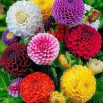 صور ازهار رائعة , مجموعة متميزة مختلفة الوانها