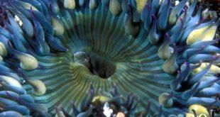اجمل الصور من اعماق البحار , مشاهد اروع من الخيال