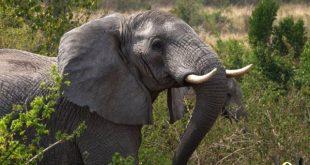 صور حلوة للحيوانات , مجموعات مختلفة ومتنوعة