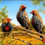 صور احلى طيور , روعة و جمال الاشكال و الالوان