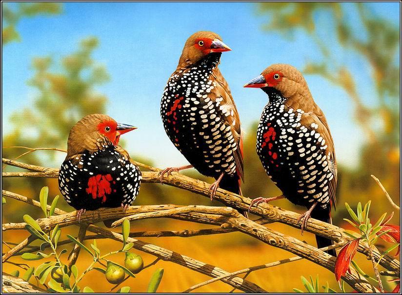 صوره صور احلى طيور , روعة و جمال الاشكال و الالوان