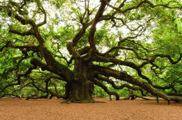 صورة غرائب وعجائب من العالم , صور اشكال اشجار مختلفة ومنوعة