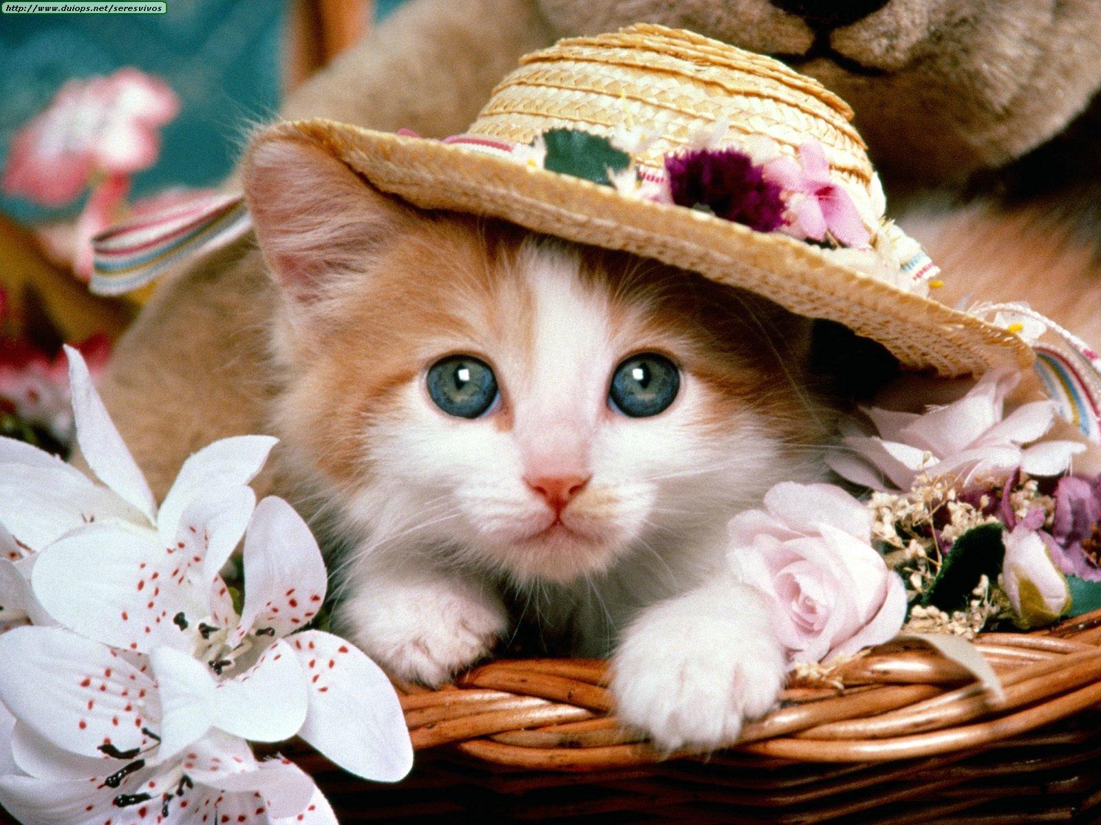 صورة صور قطط تهبل , خلفيات جميلة مختلفة