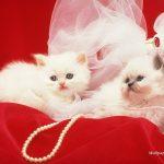 صور قطط تهبل , خلفيات جميلة مختلفة