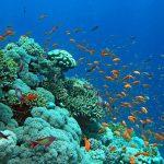 صور في اعماق البحار , جمال طبيعي واشكل منوعة