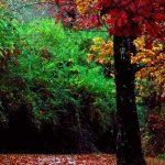 صور جمال الطبيعة , الاشجار في فصل الربيع