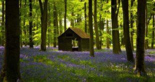 اجمل صور الغابات , مناظر الطبيعة والوانها الرائعة