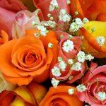 خلفيات ورود وزهور , صور طبيعية جميلة رائعة