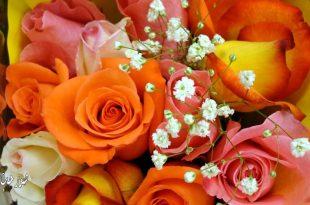 صورة خلفيات ورود وزهور , صور طبيعية جميلة رائعة