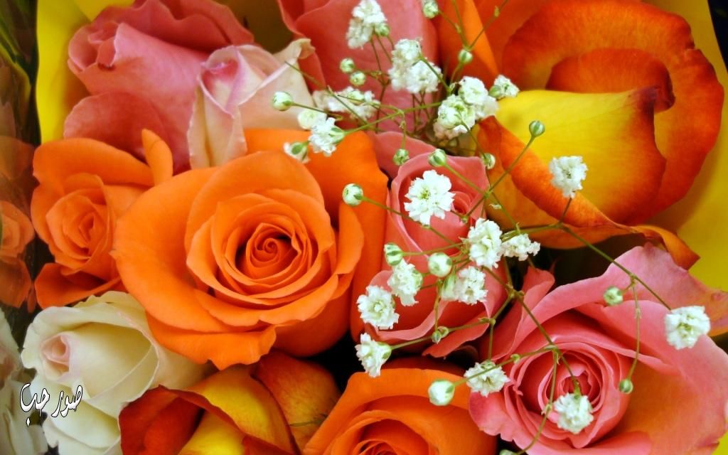 صوره صور ورد وزهور , مناظر طبيعية والوان جميلة