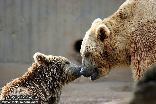 صوره الرحمة عند الحيوانات , صور معبرة سبحان الله