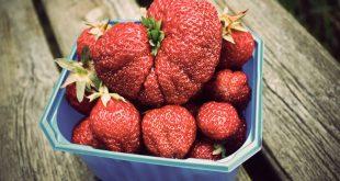 اكبر فراولة في العالم , اجمل واطعم نوع فاكهه