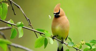 صور طيور رائعة , اجمل صوره عصفوره جميله