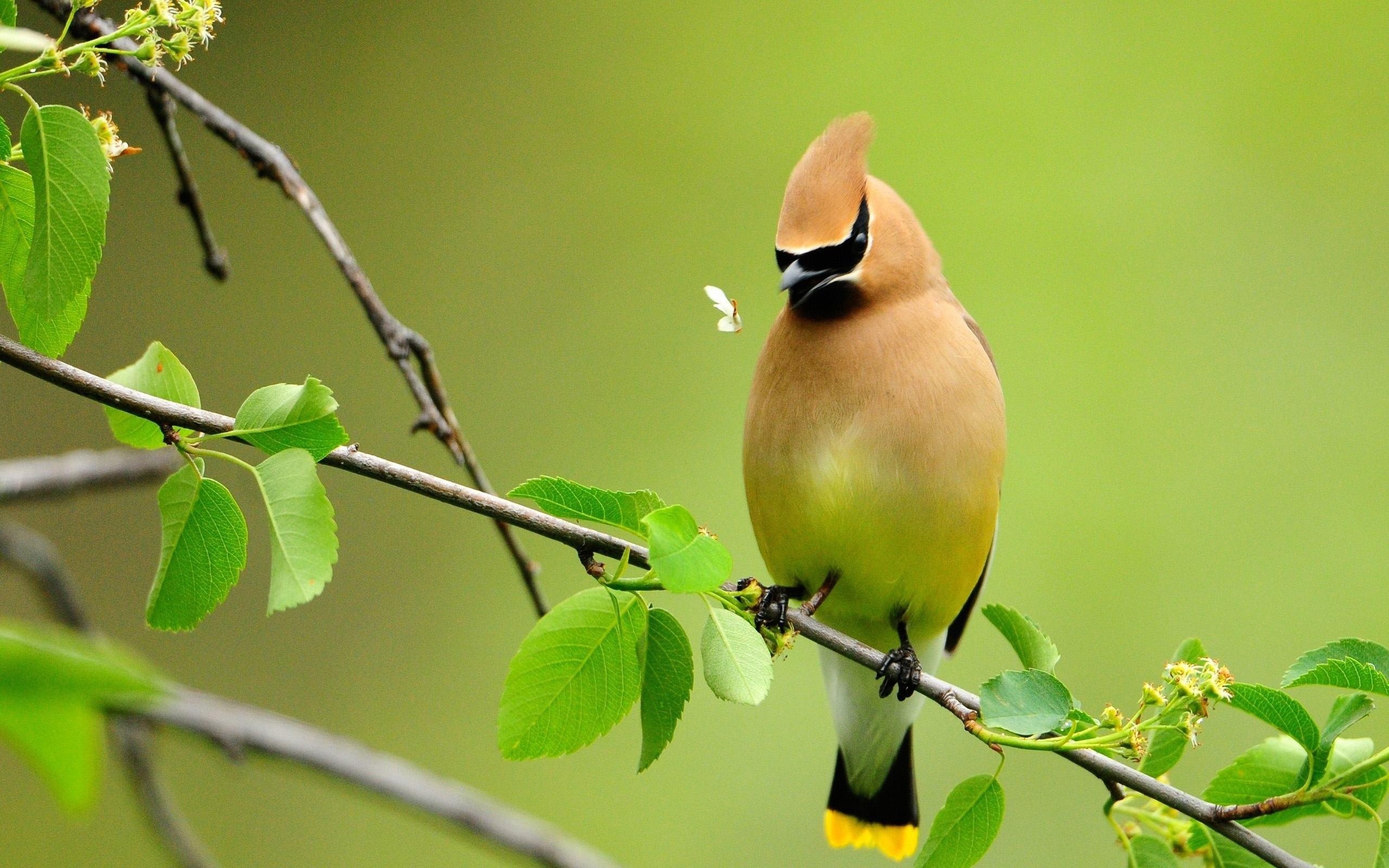 صورة صور طيور رائعة , اجمل صوره عصفوره جميله
