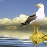 سبحان الله في خلقه , اجدد صور فيها اجمل مخلوقات