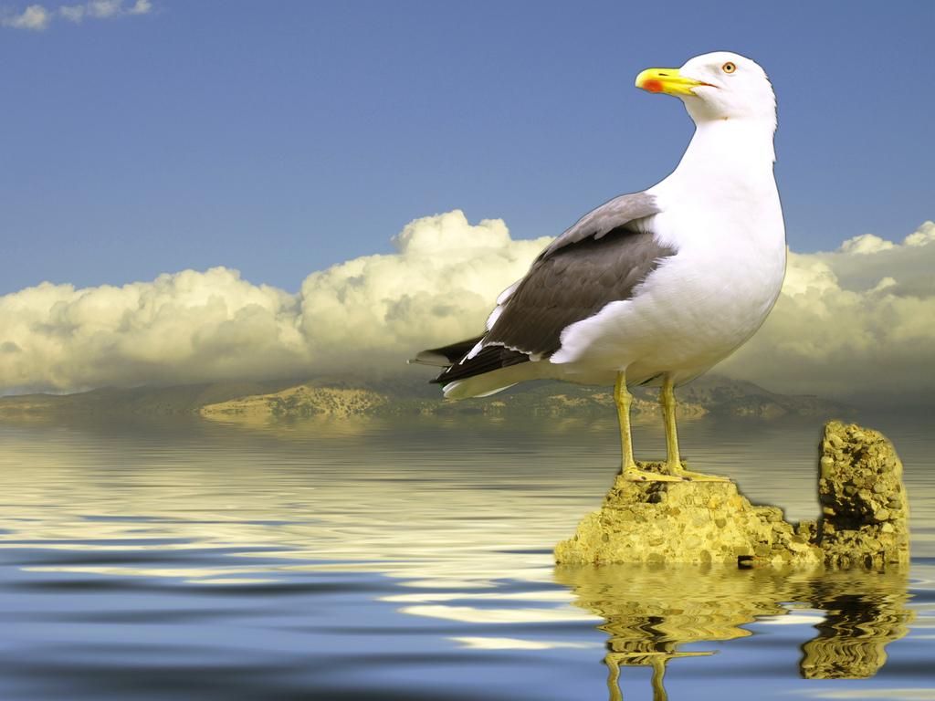 بالصور سبحان الله في خلقه , اجدد صور فيها اجمل مخلوقات 3900