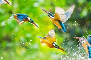 صوره صور مره روعه , اجمل صوره طبيعية رائعه
