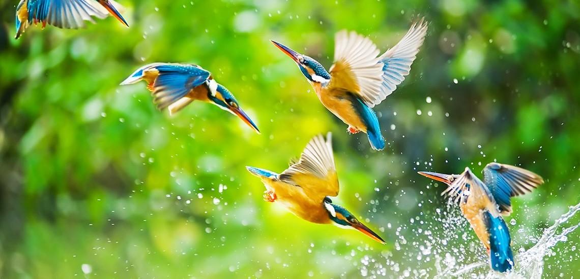 صورة صور مره روعه , اجمل صوره طبيعية رائعه