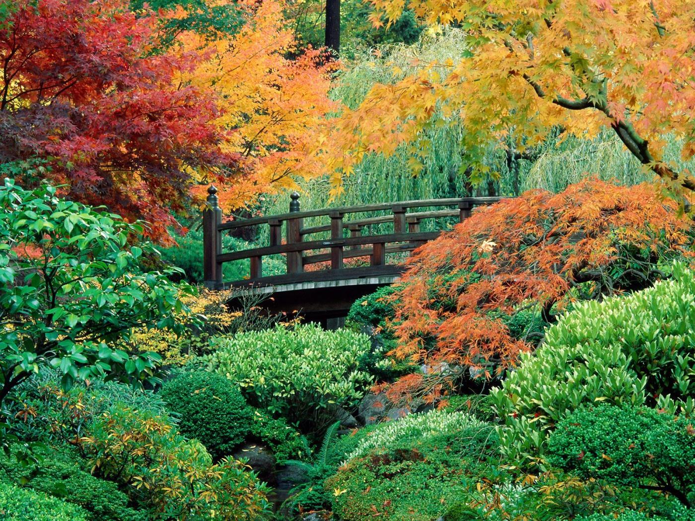 بالصور صور طبيعة جميلة , احلى خلفيات اشجار وسماء وبحار روعه 3981 4
