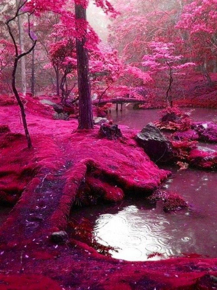 بالصور صور طبيعة جميلة , احلى خلفيات اشجار وسماء وبحار روعه 3981 7