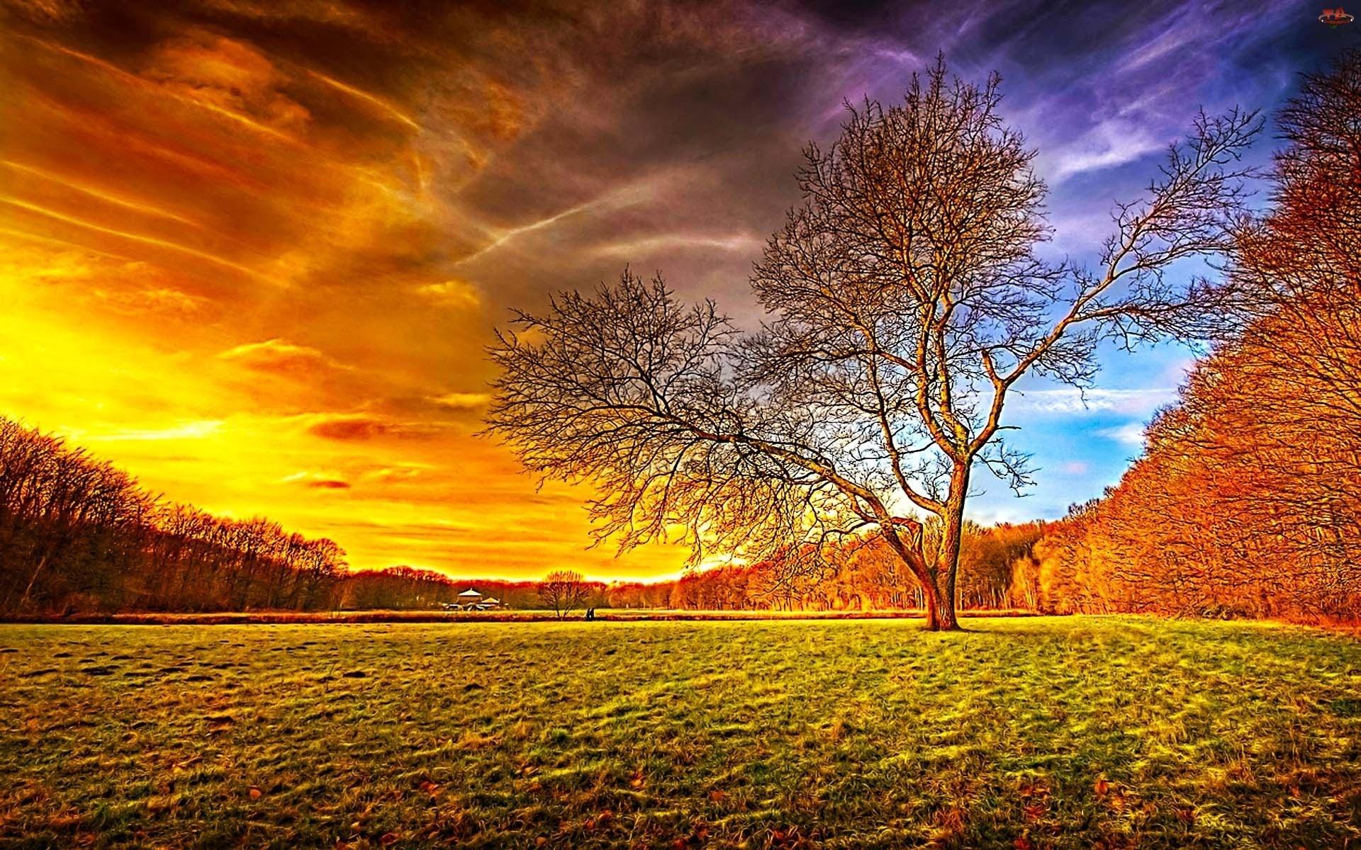 بالصور صور طبيعة جميلة , احلى خلفيات اشجار وسماء وبحار روعه 3981
