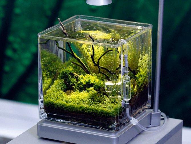 بالصور اصغر حوض سمك في العالم , لعشاق تربية الحيوانات الاليفه 3991 10