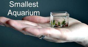 اصغر حوض سمك في العالم , لعشاق تربية الحيوانات الاليفه