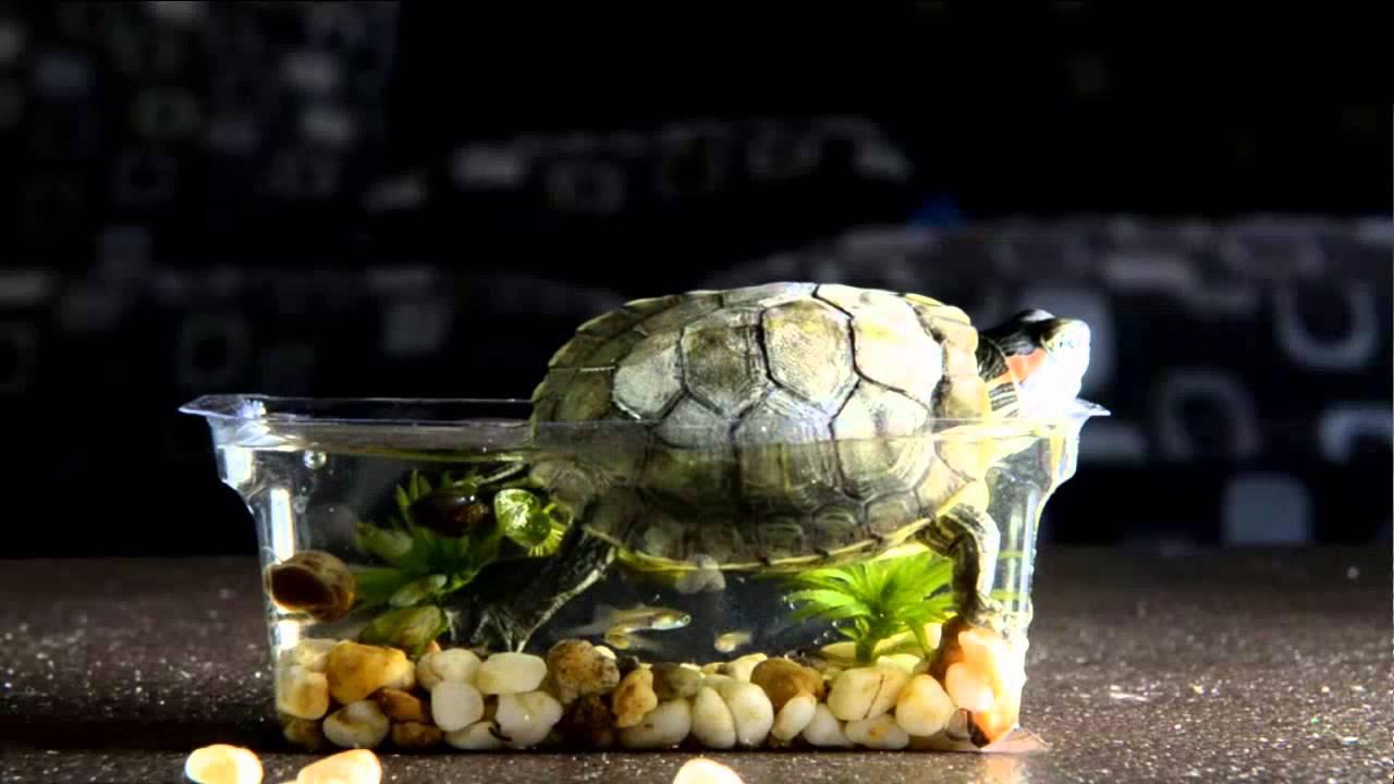 بالصور اصغر حوض سمك في العالم , لعشاق تربية الحيوانات الاليفه 3991 2