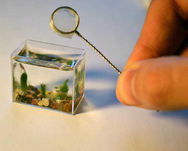بالصور اصغر حوض سمك في العالم , لعشاق تربية الحيوانات الاليفه 3991 6