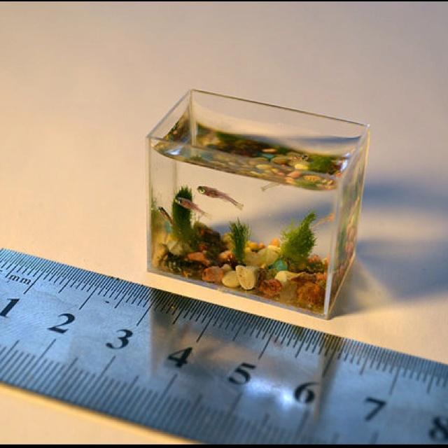 بالصور اصغر حوض سمك في العالم , لعشاق تربية الحيوانات الاليفه 3991 8
