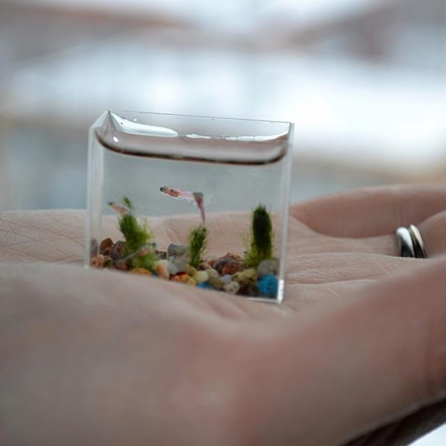 بالصور اصغر حوض سمك في العالم , لعشاق تربية الحيوانات الاليفه 3991 9