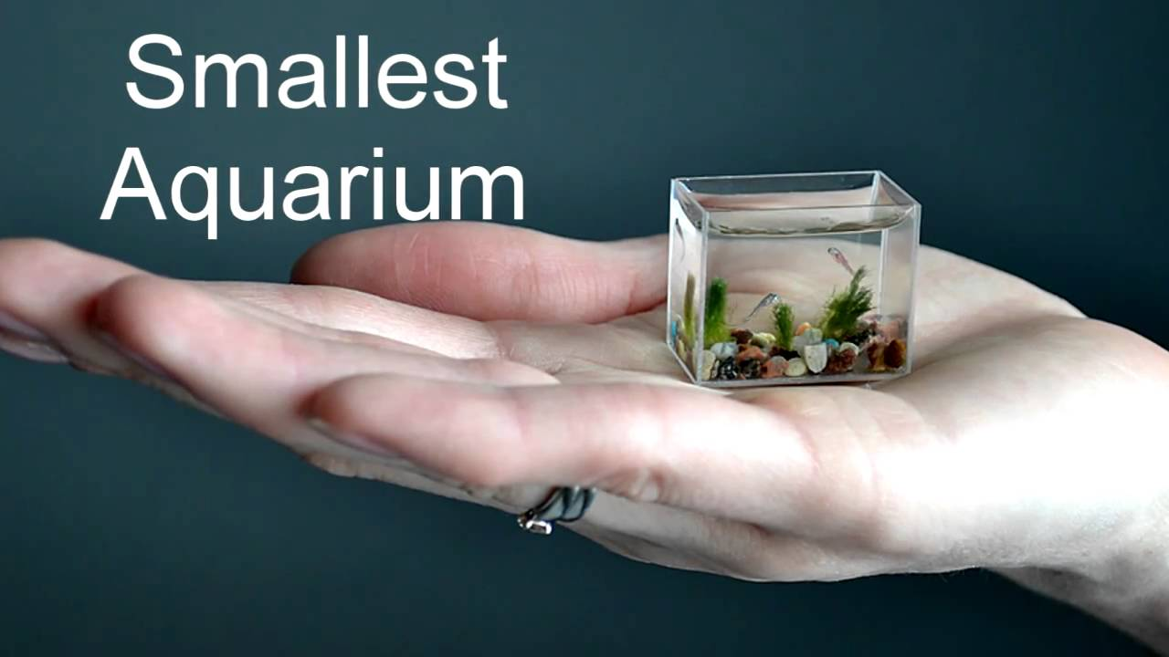 صوره اصغر حوض سمك في العالم , لعشاق تربية الحيوانات الاليفه