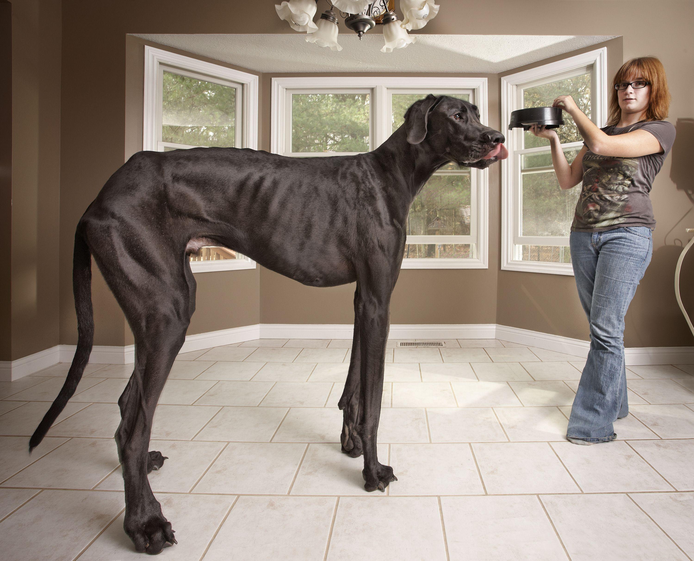 صورة اطول كلب في العالم , صوره ل اغرب dog