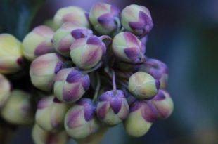 صوره صور زهرة الشتاء , تعتبر الزهور الشتاء من اجمل الزهور