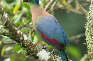 صورة اجمل طيور الدنيا , صور طيور فى منتهى الروعه