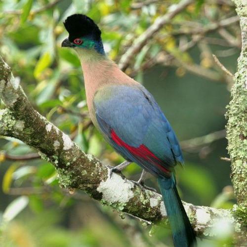 صور اجمل طيور الدنيا , صور طيور فى منتهى الروعه