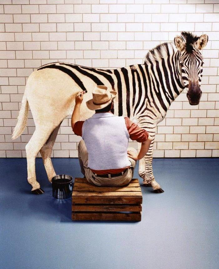 بالصور افضل الصور المضحكة في العالم , اضحك مع اجمل الصور