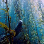 صور من تحت الماء , مناظر مخلقات بحرية مذهلة