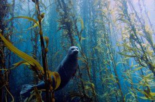 صوره صور من تحت الماء  ,  مناظر مخلقات بحرية مذهلة