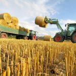 صور مزارع القمح , روعة حقول الذهب الاصفر