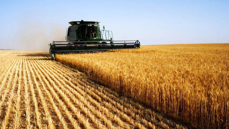 بالصور صور مزارع القمح , روعة حقول الذهب الاصفر 2663 7