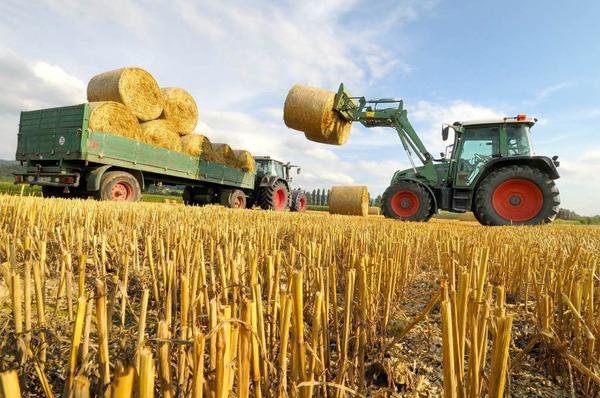 بالصور صور مزارع القمح , روعة حقول الذهب الاصفر 2663
