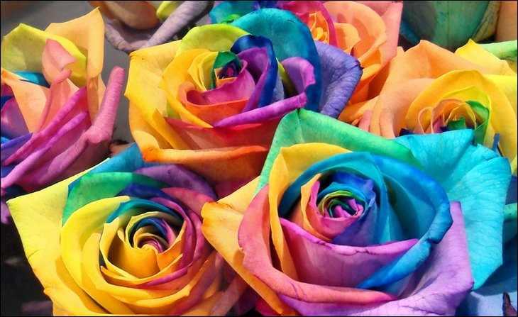 صوره اغرب وردة في العالم , صور زهرة قوس قزح من اروع الزهور