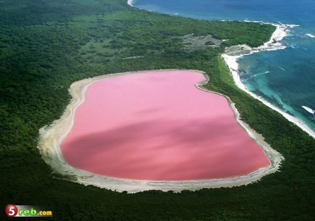 صورة غرائب وعجائب الطبيعه , صور البحيرة الوردية في استراليا