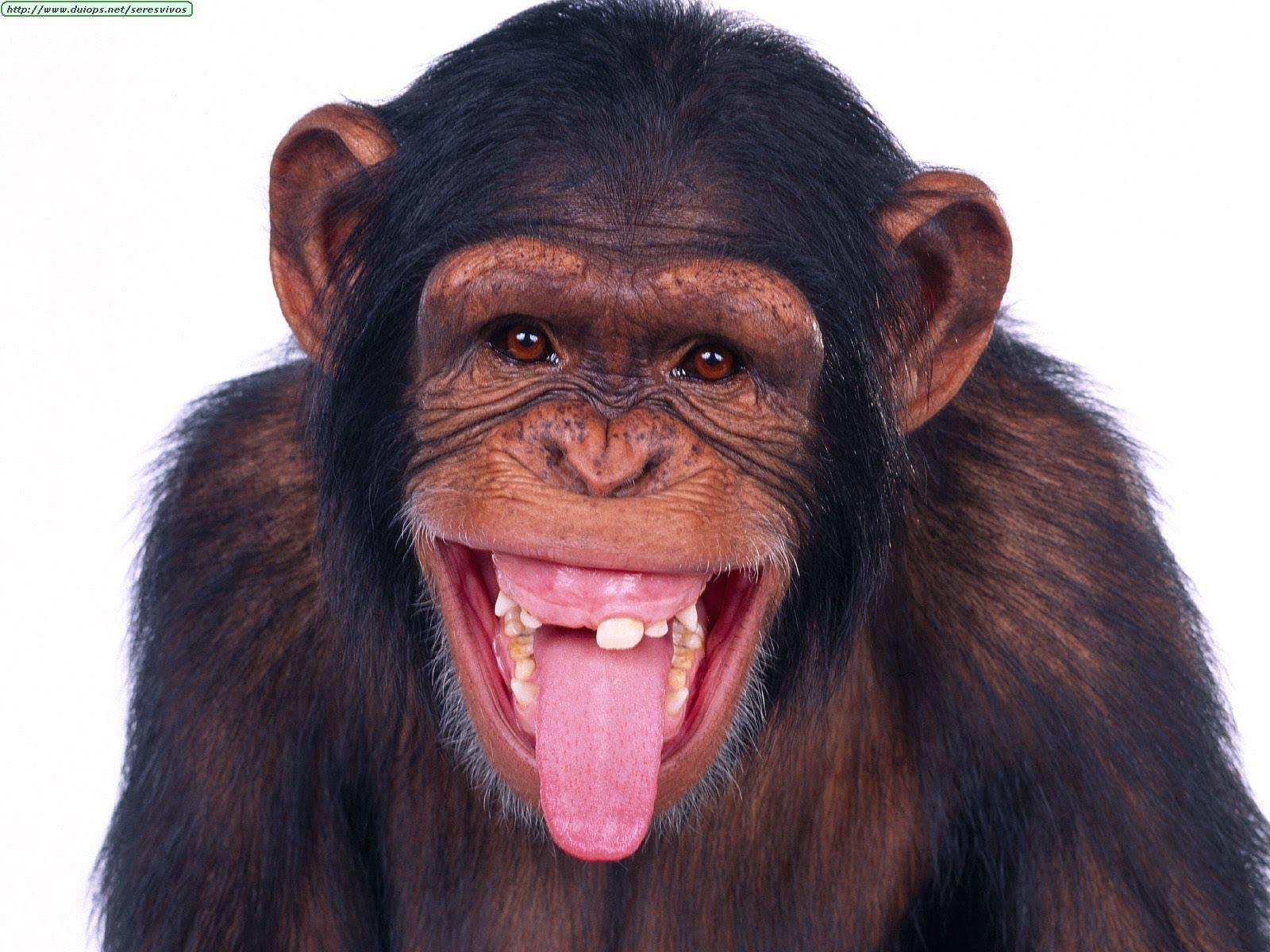 صورة عالم الحيوانات المضحكة , صور مدهشة ومختلفة من عالم غريب