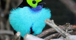 صور اجمل انواع الطيور , اشكال منوعة والوان رائعة