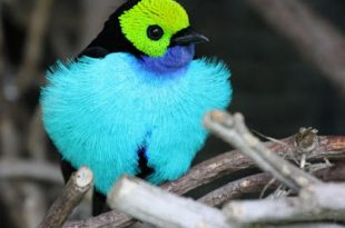 صوره صور اجمل انواع الطيور , اشكال منوعة والوان رائعة