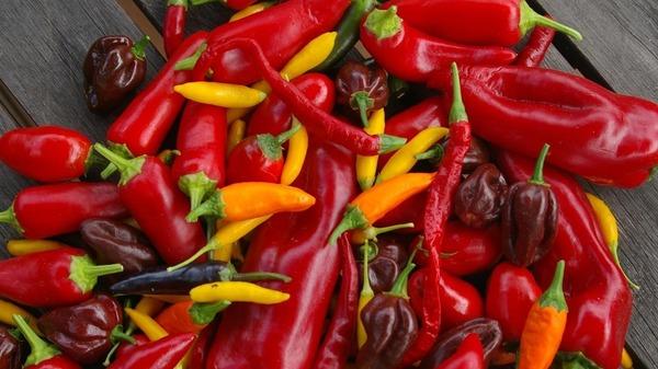 بالصور فلفل حار جدا , صور مختلفة لنبتة لها قوائد كثيرة 2808 2