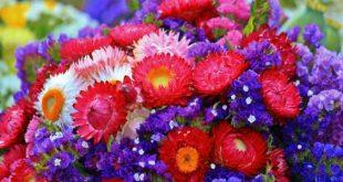 اجمل صور ورد , اشكال متنوعة ومتميزة للازهار